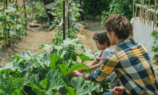 家庭菜園 イメージ写真